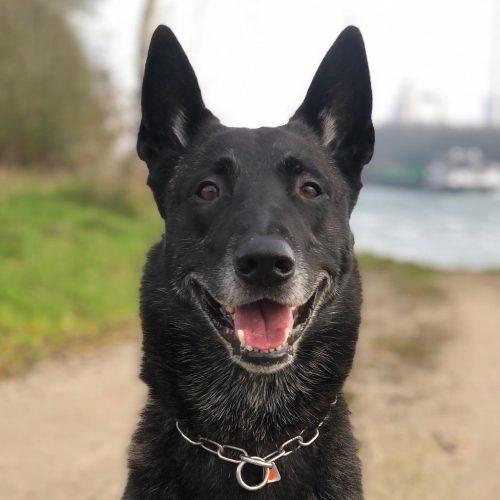 Apollon-Führen-Erleben-Reiten-Hund-Hitch