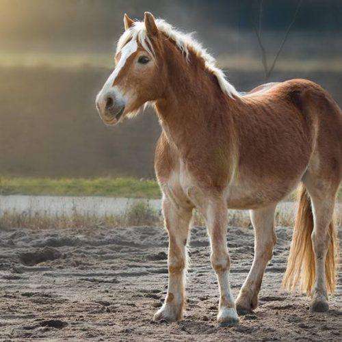Apollon-Führen-Erleben-Reiten-Pferd-Santos